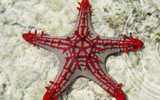 star, море, fish, underwater, tourism, занзибар, diving, you, red, африка