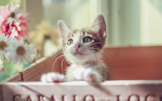 кот, черная, cute, котенок, kitty, пароль, картинка, permission, aegean