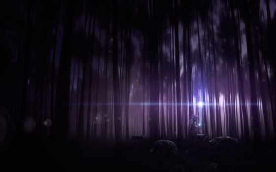 ночь, лес