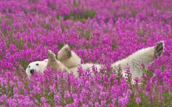 медведь, полярный, цветы, белый, цветах, animals,