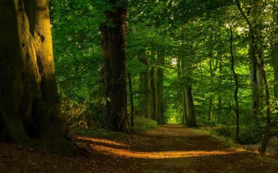лес, деревья, листва