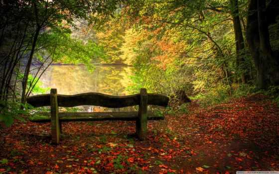 осень, природа, скамейка