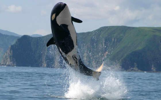 кит, природа, горы
