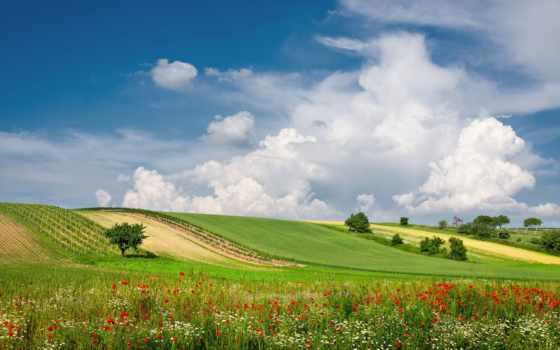 landscape, summer, природа, цветы, пейзажи -, луг, oblaka, austrian,