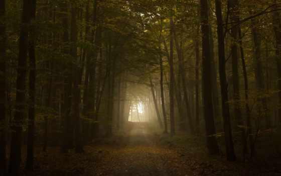 dark, blue, лес, сердце, pictures, природа, forests,