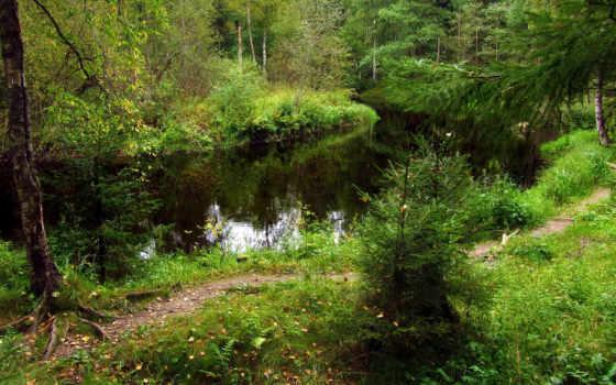 природа, russian, картинка, трава, reki, леса, линдуловская, небо, рощино, trees, grove,