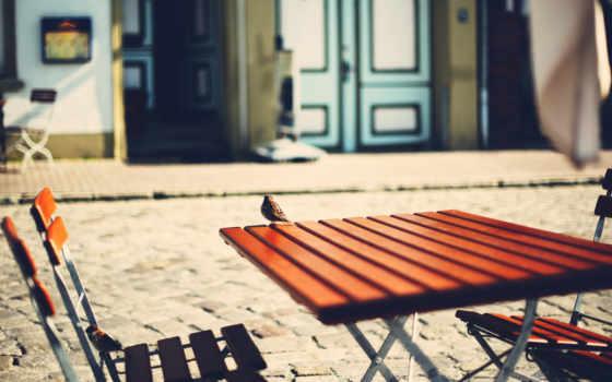 птица, столик, июл, воробей, улица,