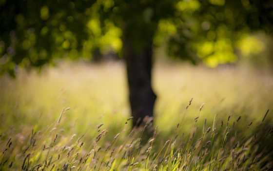 поле, трава, дерево, небо, oblaka, мяч,