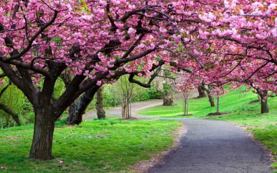 весна, весенние, feng, shui,