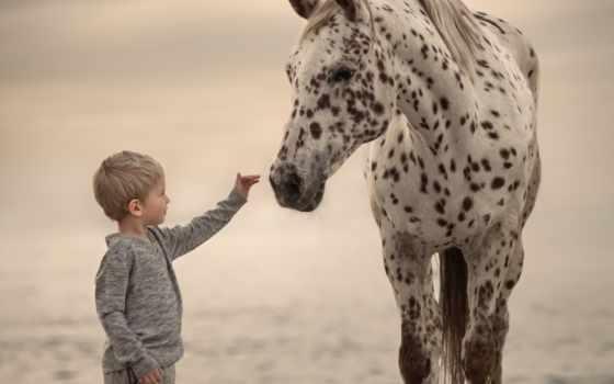 pferde, und, sveta, butko, flickr, лошадь, children, фото, pinterest, косметика,