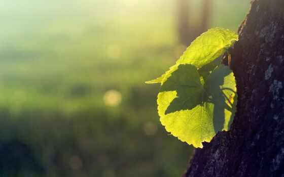сестричка, небо, india, лес, свет, sun, яркий, природа, притча, ирландский, росток