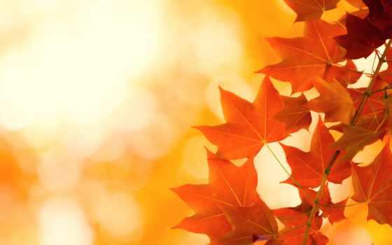 листья, осень Фон № 32305 разрешение 1680x1050
