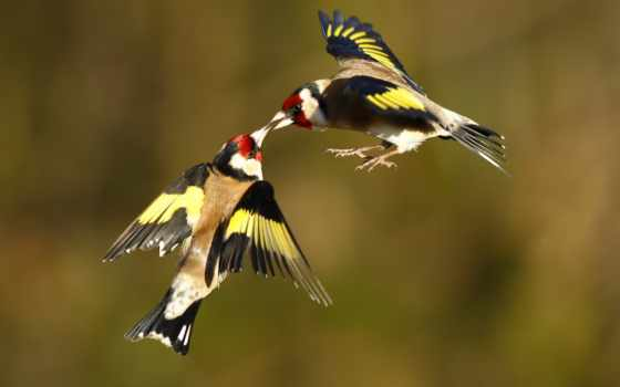 полете, birds, животные
