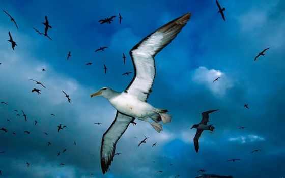 птицы, чайка, заставки