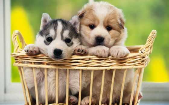 parede, cachorros, cachorro, papel, papéis, para, cesta, seu, ibaixa, filhotes,
