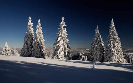 ночь, зимняя, flash, елки, горела, свеча, города, мурманск, декабря, полярная, конец,