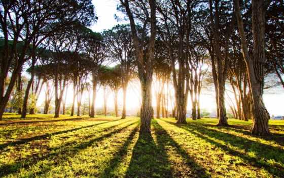 лес, осень, abyss, sydney, high, interfacelift,