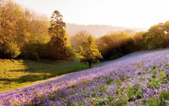 природа, sun, trees, rays, растения, cvety, summer, свет, поляна, день, зелёный,