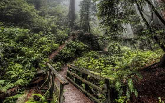 мост, лес, природа, дорога, мосты, сквозь, девушка, высоком, дерево, очень,