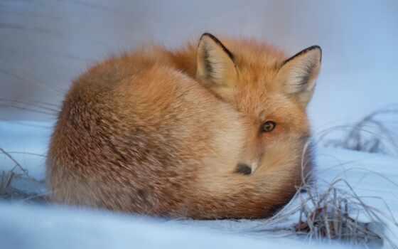 ночь, спокойствие, картинка, фокс, лисенок, postcard, wash, wish, animal