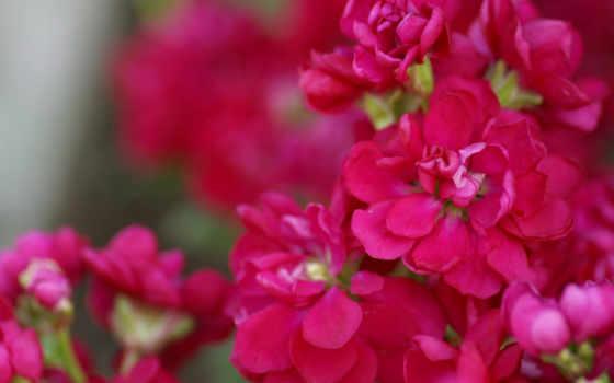 flower, garden