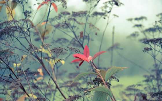 туман, трава, листья