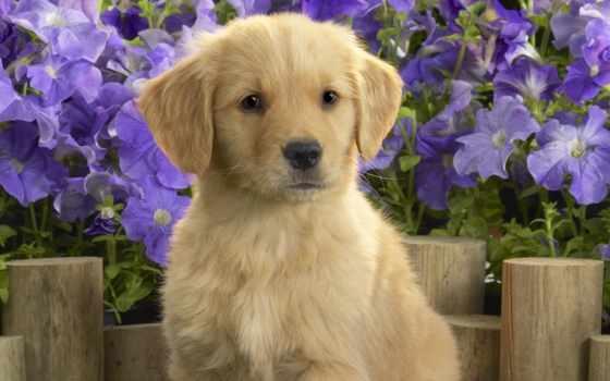 щенок, цветы