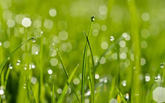 роса, мокрая трава, после дождя