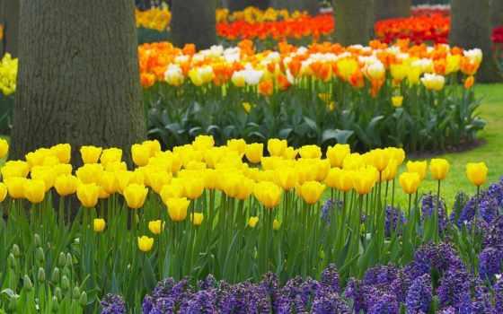 часть, цветы, весна