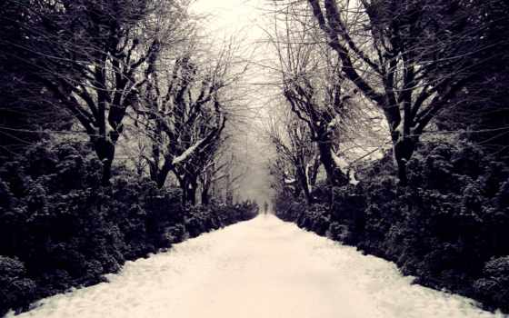 снег, человек, аллея, природа, деревья,