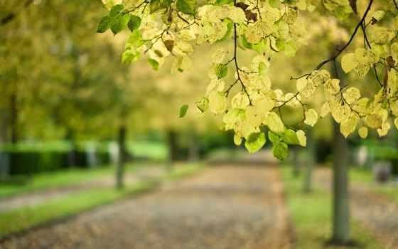 branch, осень, листва, дерево, park, макро, размытость, дорога,