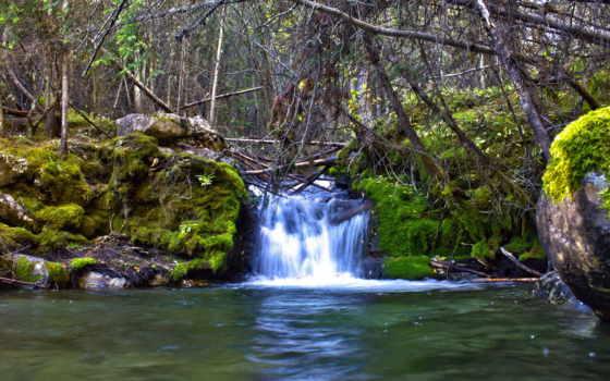ручей, природа, водопады, ветки, картинка, камни, мох, водопад,