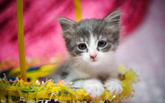 котенок, кот, lovely, easter, cute, собака, images, cats, корзина,
