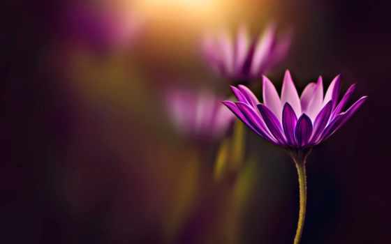 красивые, цветами, разнообразными, мар, цветов, collector, великолепных, fresh, страница,