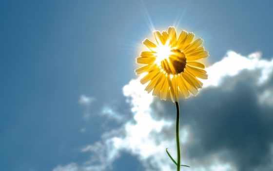 cvety, подсолнух, yellow, цветы, небо, sun, цветочек,