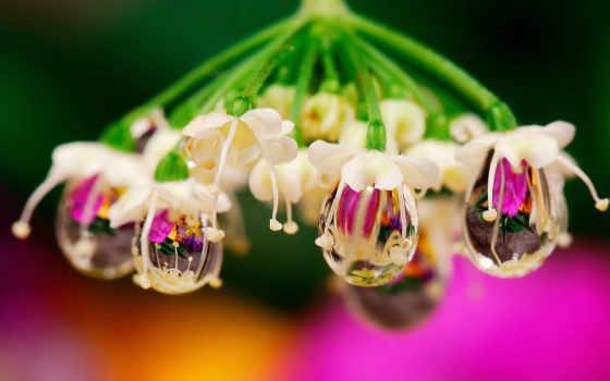 макро, капли, цветы, water, card, яndex, коллекции, цветов, коллекциях,