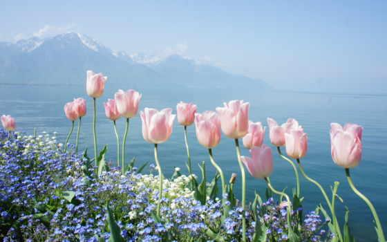 горы, cvety, тюльпаны, тюльпан, весенние, природа, water,