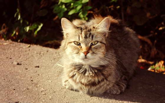 кот, кошки Фон № 32967 разрешение 1680x1050