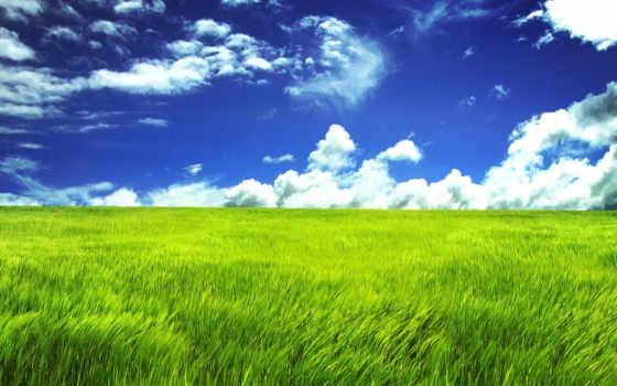 grassland, desktop, зелёный