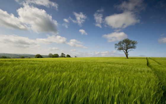 tarla, satılık, manzara, природа, landscape, oblaka, красивые,