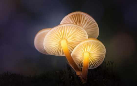 ночь, макро, свет, photography, goodfon, дешевые, mushroom, фото,