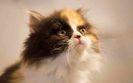 loading, denigmo, котенок, кот, страница, desktop, otter, коллекция,