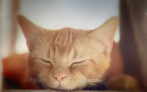 кота, кот, kitty, desktop,