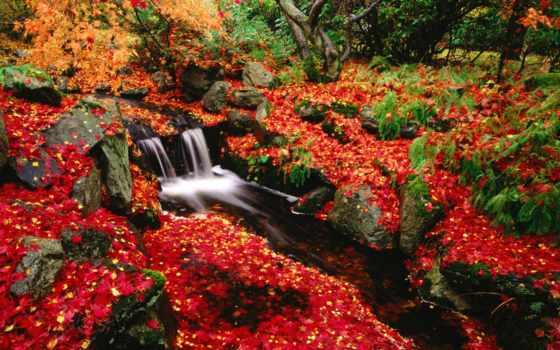 осень, japanese, garden, park, bacon, hill, яркий