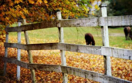 ограда, настроения