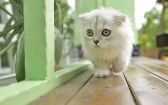 кот, коллекция, разрешений