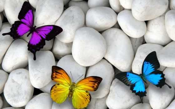 очарование, макро, бабочки