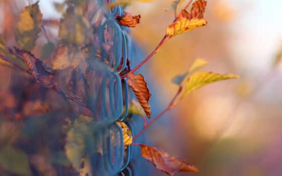 осень, макро, листва