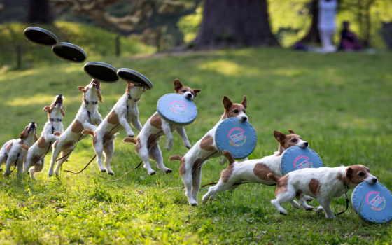 собака, собаки, природе, собакой, собаку, top, корм, breeds,