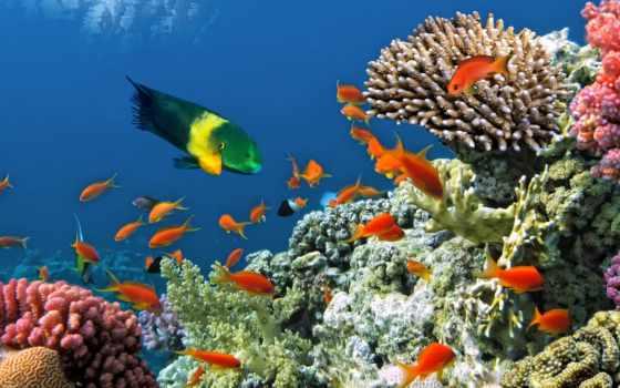 coral, риф, underwater